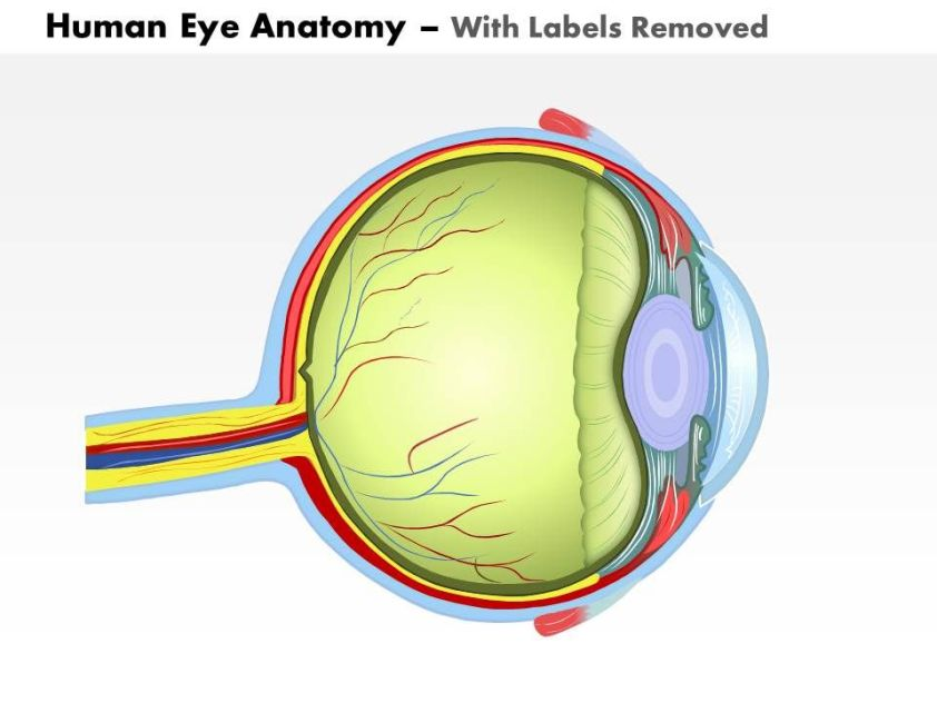 0514 Human Eye Anatomy Medical Images For PowerPoint ...