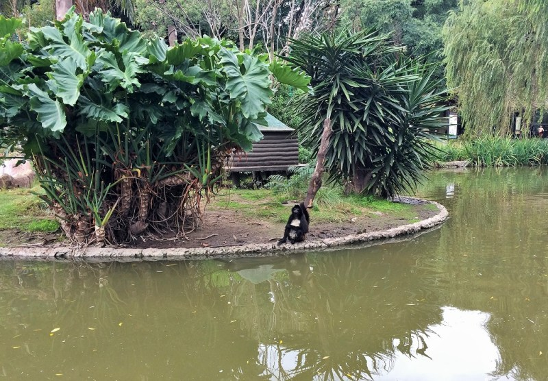 a free roaming monkey on one of the many pond islands