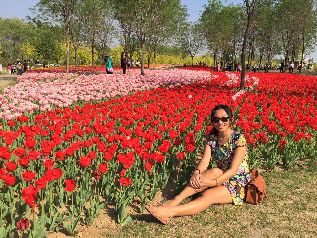 I Cant Believe Im Not In Holland Tulips In Beijing Slightly - Holland tulip festival
