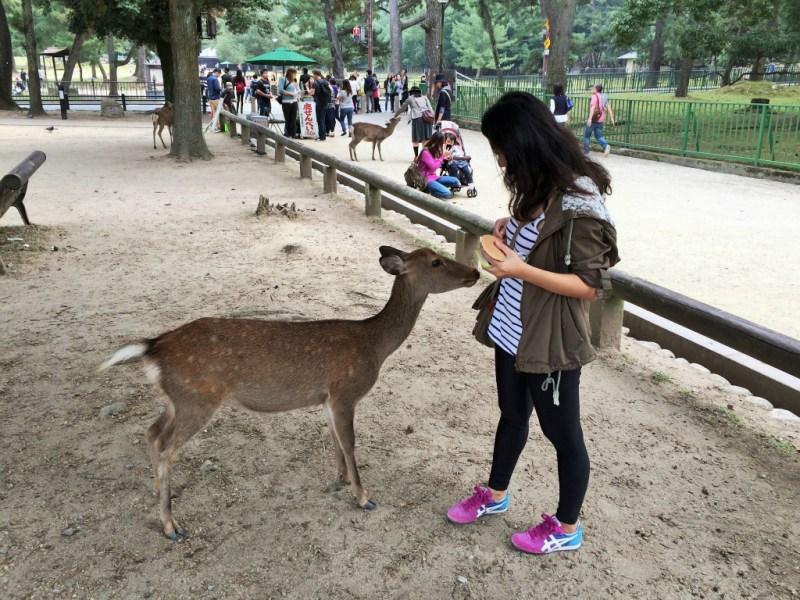 Nara deer 1
