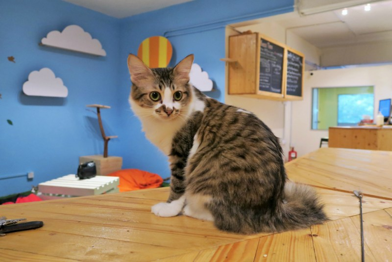 purradise cat cafe 9