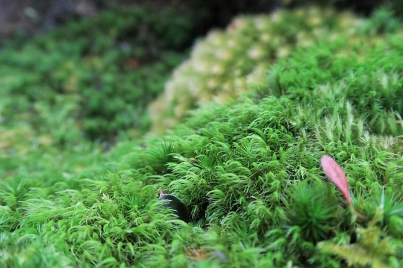 hakone-art-museum-moss-garden-5