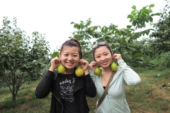 Beijing - pear picking with my sister