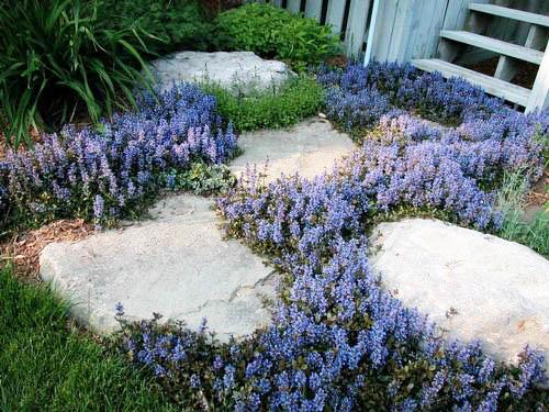 What Mulch Garden Use