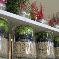 Terrariums & Airplant Planters