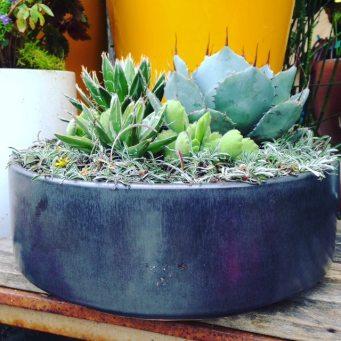 succulent custom planter aug 8