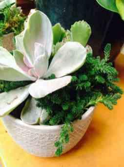 succulent custom planter aug1 6