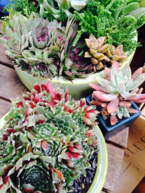 succulent custom planter aug2