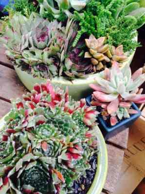 succulent custom planter aug2