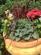 terracotta-pot-filled-with-mums-ornamental-kale-pansies-and-pennisetum-fireworks