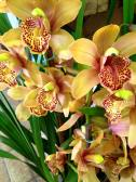 5. Orchids