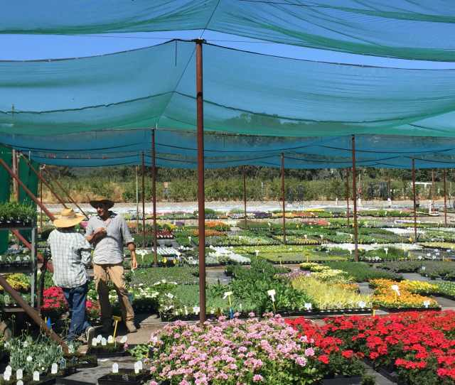 Thanks To Support From Early Customers Like Sloat Garden Center Blooms Thrived Early On As A Local Plant Producer They Were Early Leaders In Designating