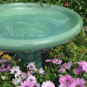 Bird baths are awesome!
