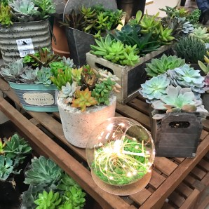 Succulents for the green thumb in your life