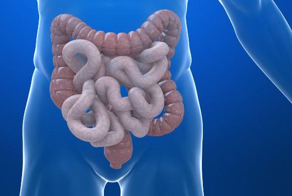 crijeva