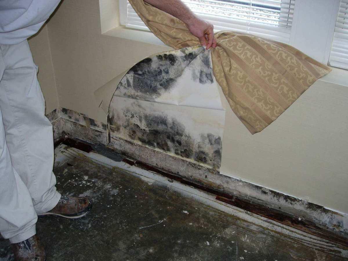 Имате мувла во домот? Без паника, еве како сами да направите природно средство против мувла!