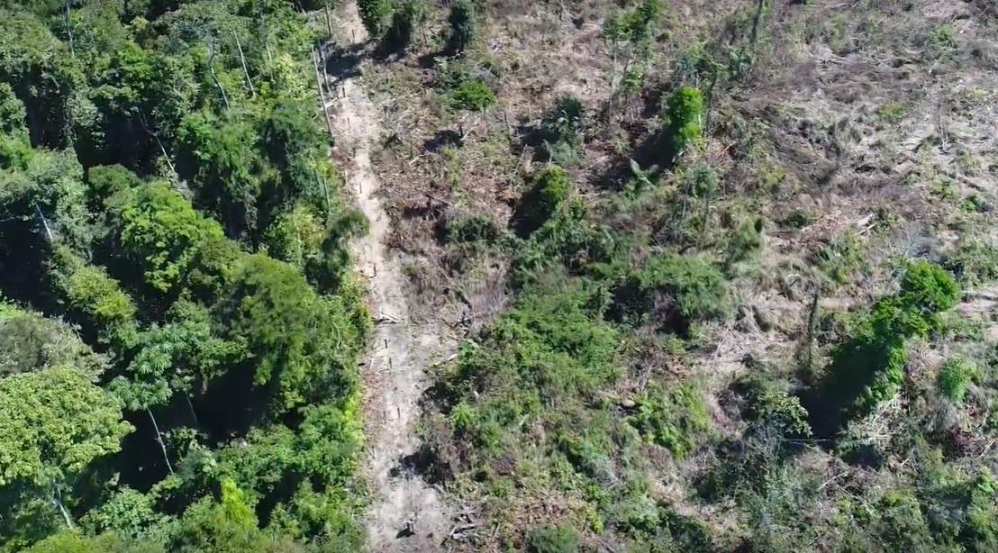 Иднината на Земјата е во опасност: Снимки со дрон ги покажуваат штетите врз шумата во Амазонија