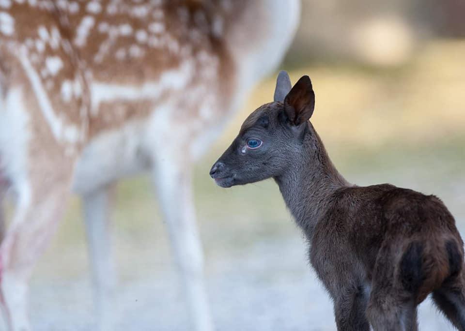 Добредојде Брауни – Зоолошката градина збогатена со нов жител!