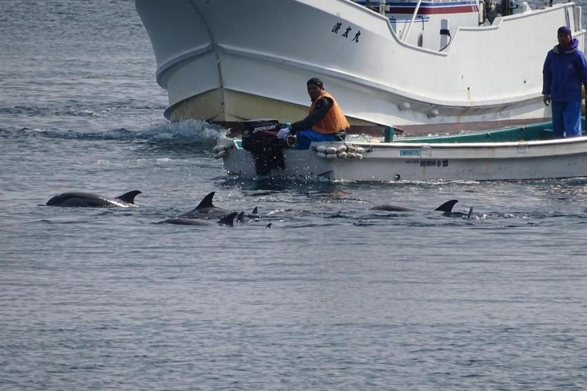ВОЗДУШНИОТ МОНИТОРИНГ покажува сè повеќе смет, а помалку делфини во Црното Море