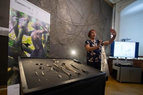 НЕВЕРОЈАТНА СЛИЧНОСТ СО ЛУЃЕТО: Откриен нов предок на човекот од пред 12 милиони години