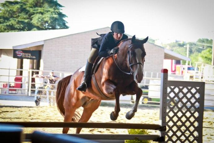 Quarter Horse Jumping