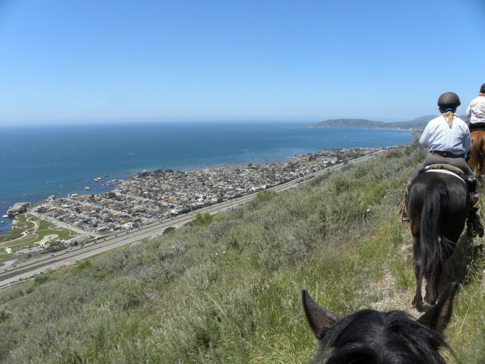 Game Plan for Eradicating Ticks from Horses, Pets and Humans | SLO Horse News
