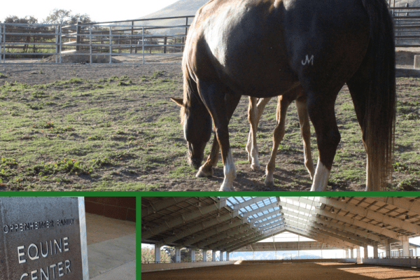 The NEW Cal Poly Horse Unit – A State of the Art Facility | SLO Horse News