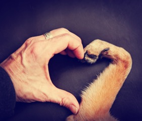 Will We Be Planning Funeral Services for our Equines and Pets? Pet Aftercare Has Changed | SLO Horse News
