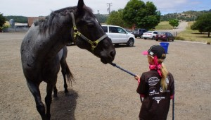 Common Mistakes Horsemen Make Tying Up and Leading a Horse   SLO Horse News