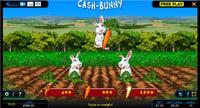 cash bunny bonus