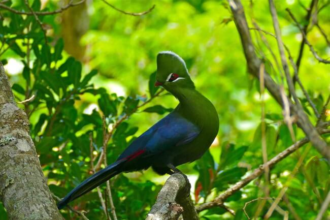 Discover-the-Local-Birdlife