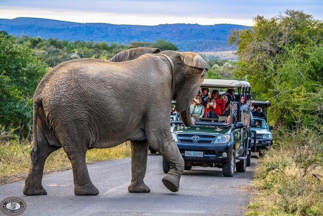 Hluhluwe-Umfolozi Game Reserve