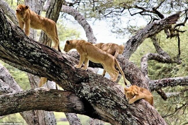 Look-for-Tree-climbing-Lions-at-Lake-Manyara