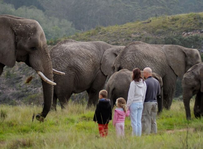 Spend-time-With-Elephants