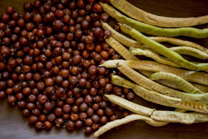 Frutos silvestres del Gran Chaco: una cuestión de mujeres - Slow Food  International