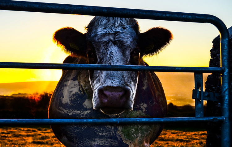 COWSPIRACY  – The beef of climate change
