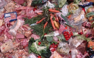Devastating food waste