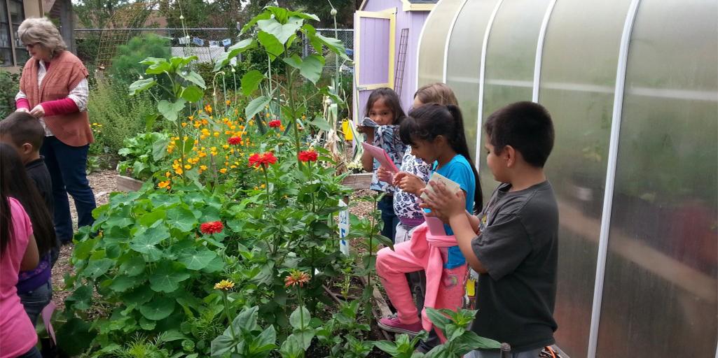 Steele Lane School Garden