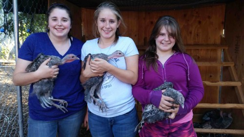 Heritage Bread Turkeys of Slow Food Russian River with 4-H