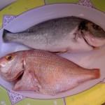 Portuguese Fish