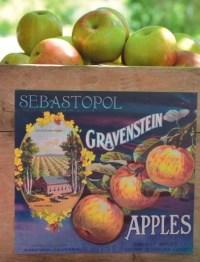 Gravenstein Apples Crate