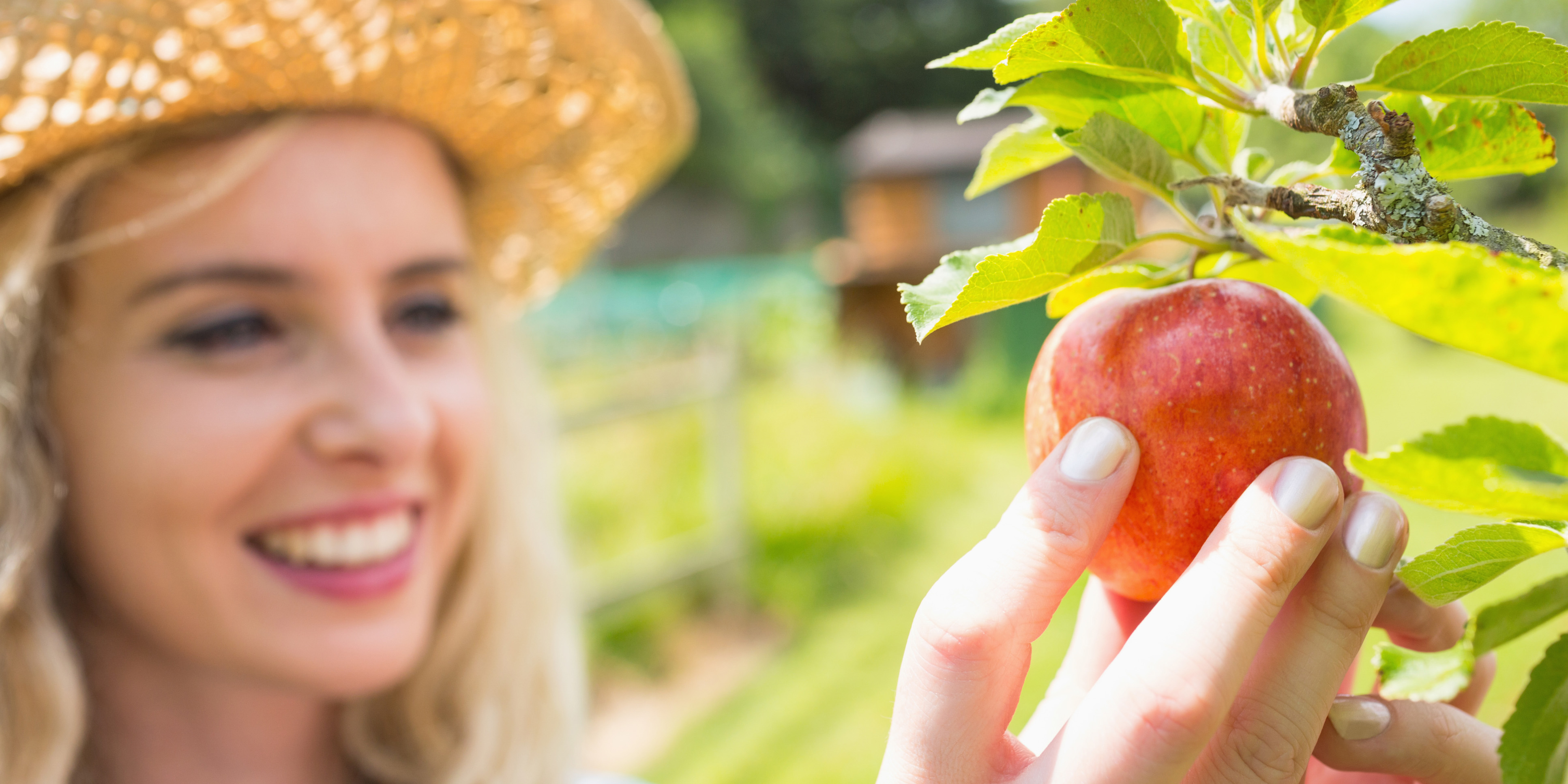 Young happy blonde picking an apple from a tree