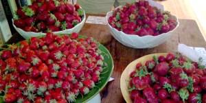 Strawberry Feast at Glen Oak Ranch