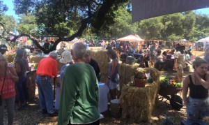 Got Cider - Food and Drink Tasting at the 2016 Gravenstein Apple Fair