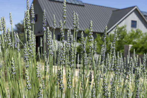 13450 Sonoma Highway 12, Glen Ellen, CA 95442 – Lavender and Barn