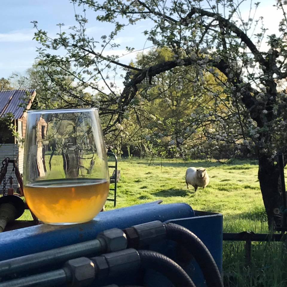 Cider Revival at Tilted Shed's Fireball Farm
