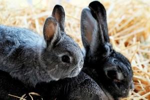 rabbit-1226371_640