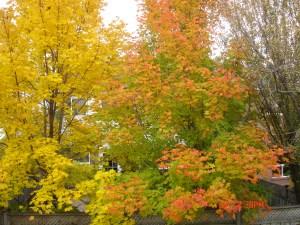 Impending Autumn