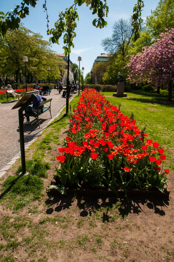 Photos: Tulip Festival in Stockholm