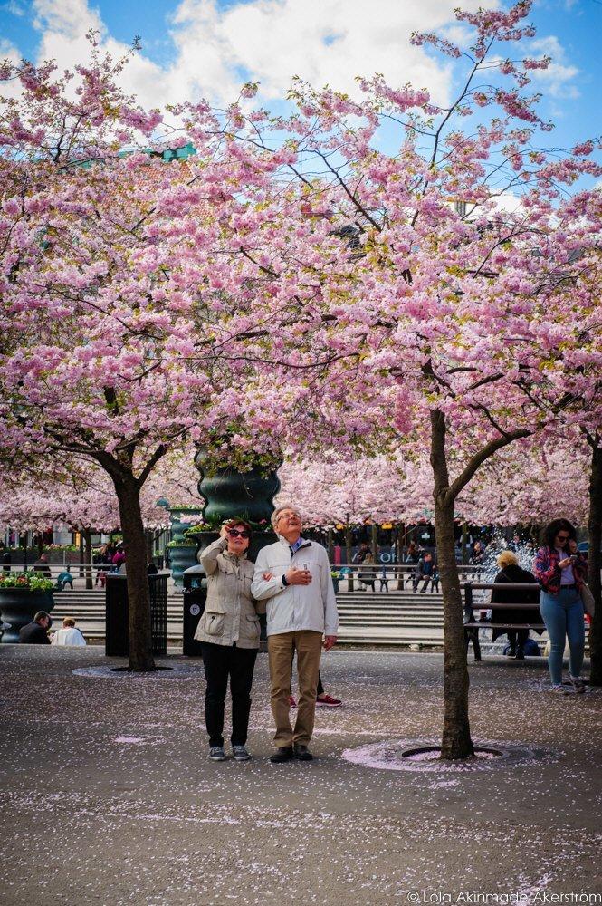 2015_CherryBlossoms_004